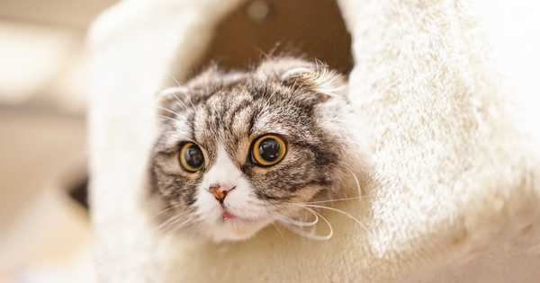 ボックスに入った猫