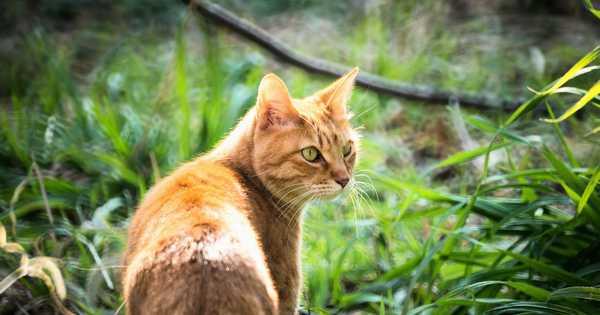 草むらにいる猫