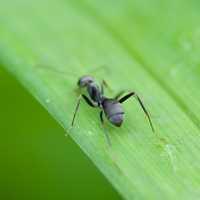 葉っぱの上の蟻