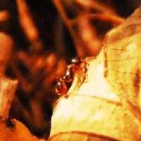 落ち葉の上の蟻