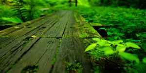 森やジャングルの夢、意味